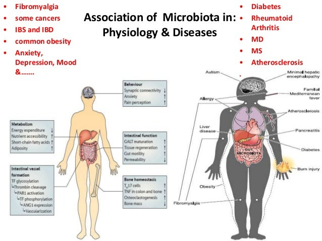 Human Gut Microbes Associated With Obesity Nature