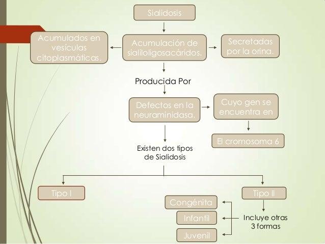 Sialidosis Acumulados en vesículas citoplasmáticas.  Acumulación de sialiloligosacáridos.  Secretadas por la orina.  Produ...