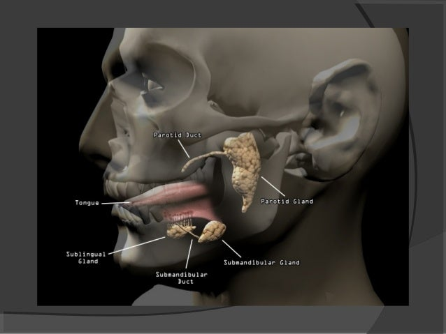 Swelling Submandibular Glands At The Floor Of The Mouth