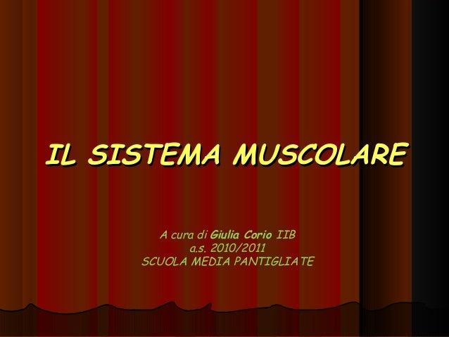 IL SISTEMA MUSCOLARE       A cura di Giulia Corio IIB            a.s. 2010/2011     SCUOLA MEDIA PANTIGLIATE