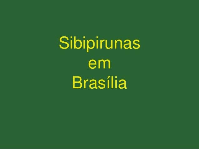 Sibipirunas em Brasília