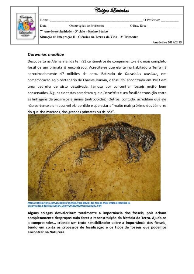 Darwinius masillae Descoberta na Alemanha, Ida tem 91 centímetros de comprimento e é o mais completo fóssil de um primata ...