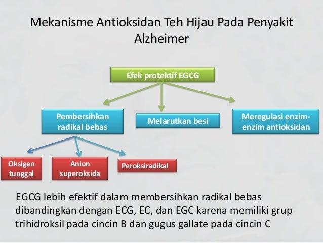 manfaat teh hijau pada penyakit alzheimer