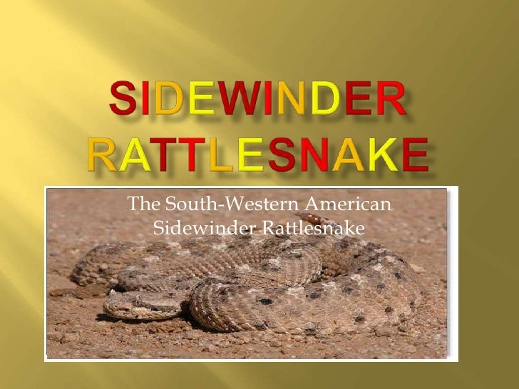 The South-Western American  Sidewinder Rattlesnake