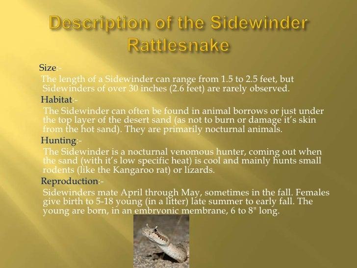 sidewinder rattle snake 5 728?cb=1338531496 sidewinder rattle snake