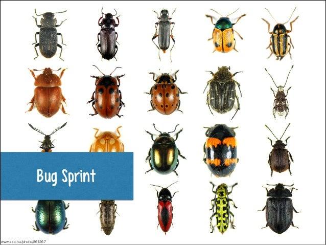 Bug Sprint  www.sxc.hu/photo/861267