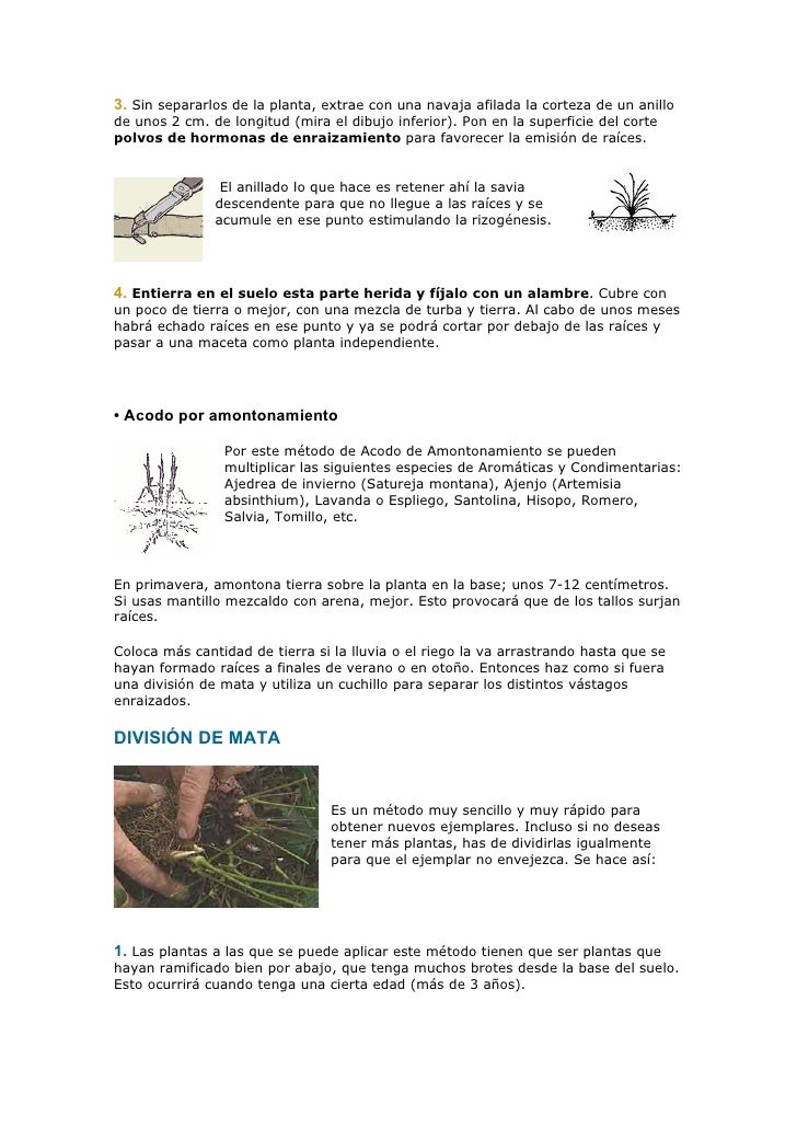 Siembra De Plantas Medecinales