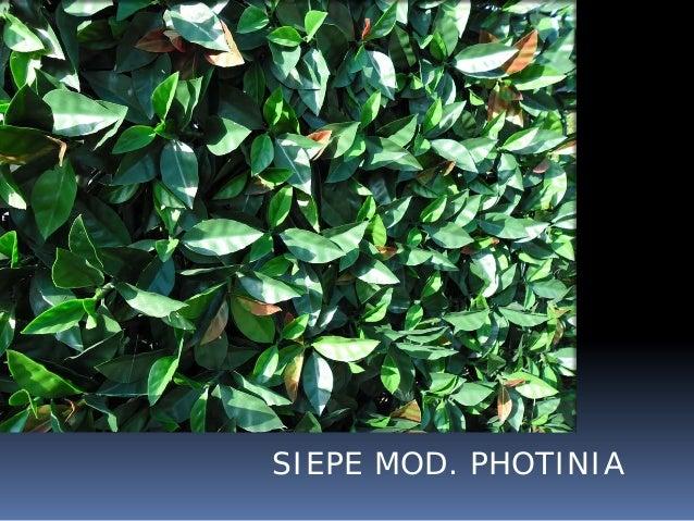 Siepi artificiali siepi finte siepi plastica siepe for Siepe sempreverde