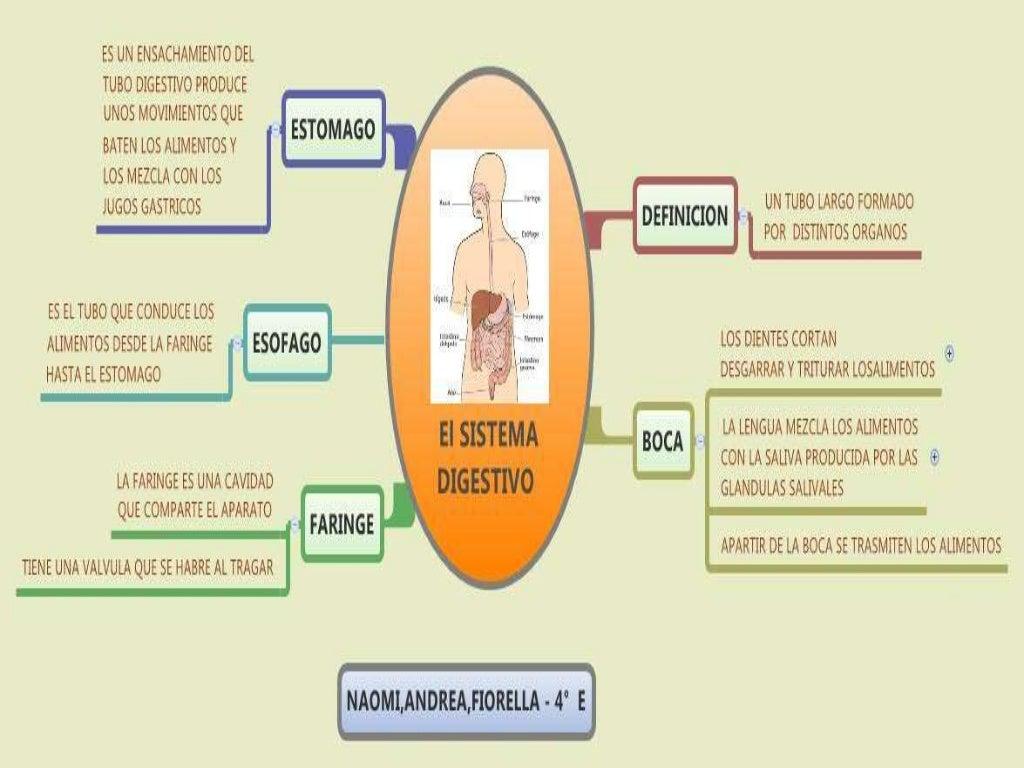 Mapas mentales del Sistema digestivo (Xmind)