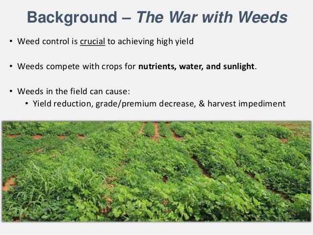 Managing Cruciferous and Solanaceous Flea Beetles in Organic Farming Systems