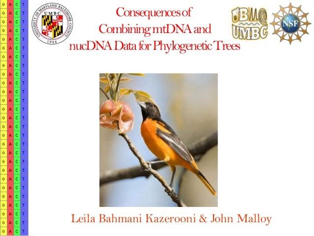 Consequences of    Combining mtDNAandnucDNAData for Phylogenetic TreesLeila Bahmani Kazerooni & John Malloy