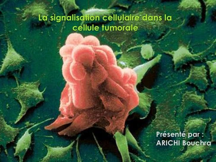 La signalisation cellulaire dans la        cellule tumorale                              Présenté par :                   ...