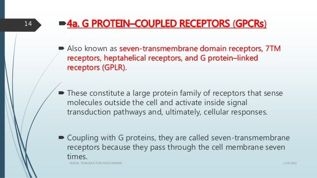 4a. G PROTEIN–COUPLED RECEPTORS (GPCRs)  Also known as seven-transmembrane domain receptors, 7TM receptors, heptahelical...