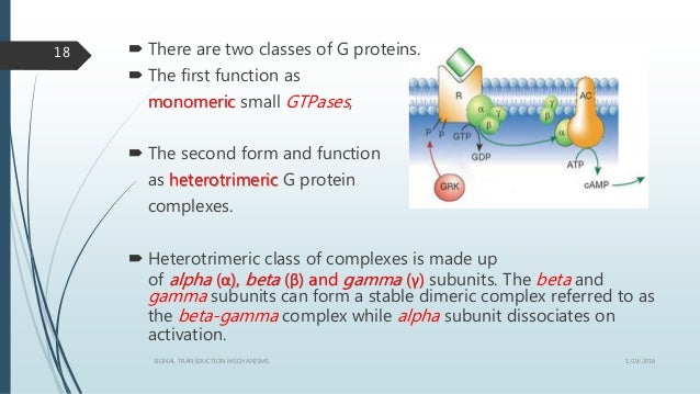  There are two classes of G proteins.  The first function as monomeric small GTPases,  The second form and function as ...