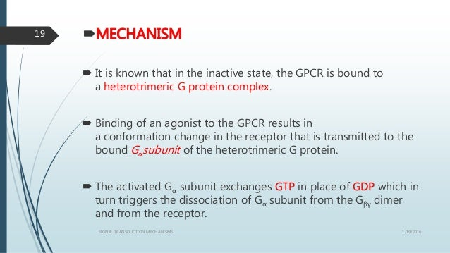 MECHANISM  It is known that in the inactive state, the GPCR is bound to a heterotrimeric G protein complex.  Binding of...
