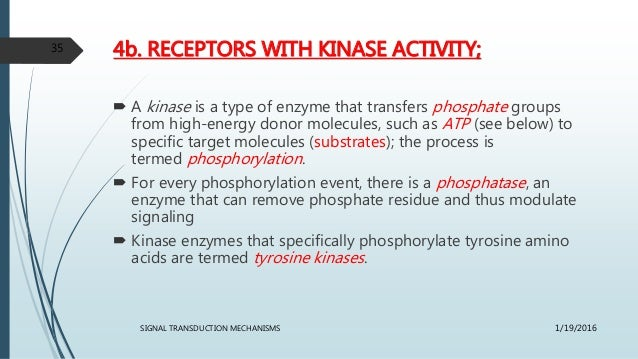 4b. RECEPTORS WITH KINASE ACTIVITY;  A kinase is a type of enzyme that transfers phosphate groups from high-energy donor ...