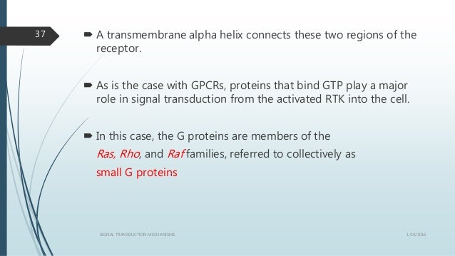  A transmembrane alpha helix connects these two regions of the receptor.  As is the case with GPCRs, proteins that bind ...