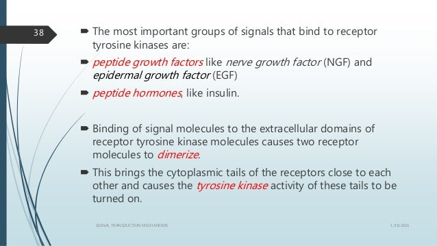  The most important groups of signals that bind to receptor tyrosine kinases are:  peptide growth factors like nerve gro...