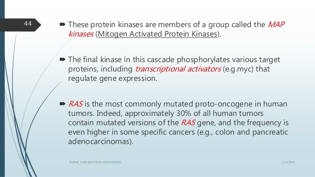  These protein kinases are members of a group called the MAP kinases (Mitogen Activated Protein Kinases).  The final kin...