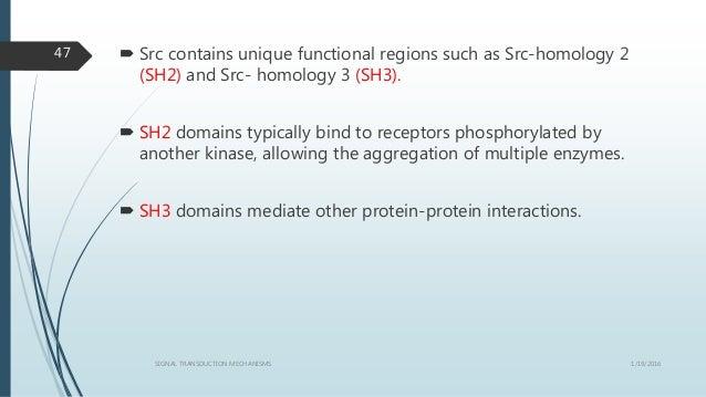  Src contains unique functional regions such as Src-homology 2 (SH2) and Src- homology 3 (SH3).  SH2 domains typically b...