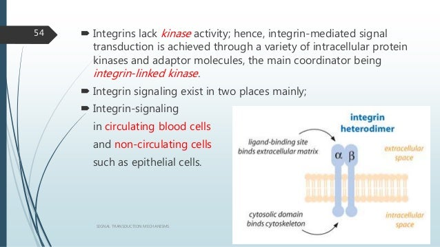  Integrins lack kinase activity; hence, integrin-mediated signal transduction is achieved through a variety of intracellu...