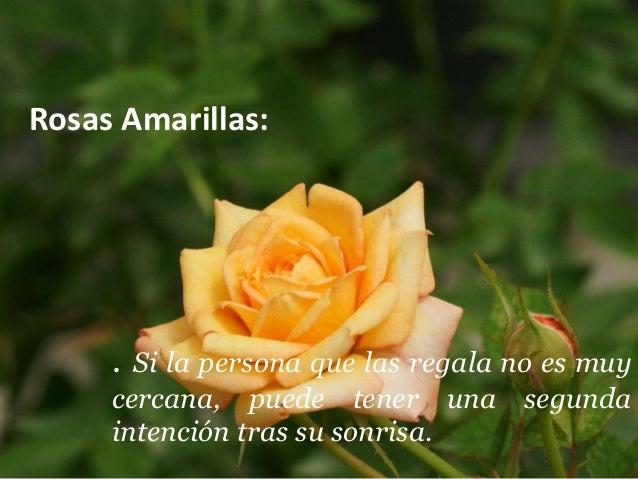 Significado de las rosas - Significado rosas amarillas ...