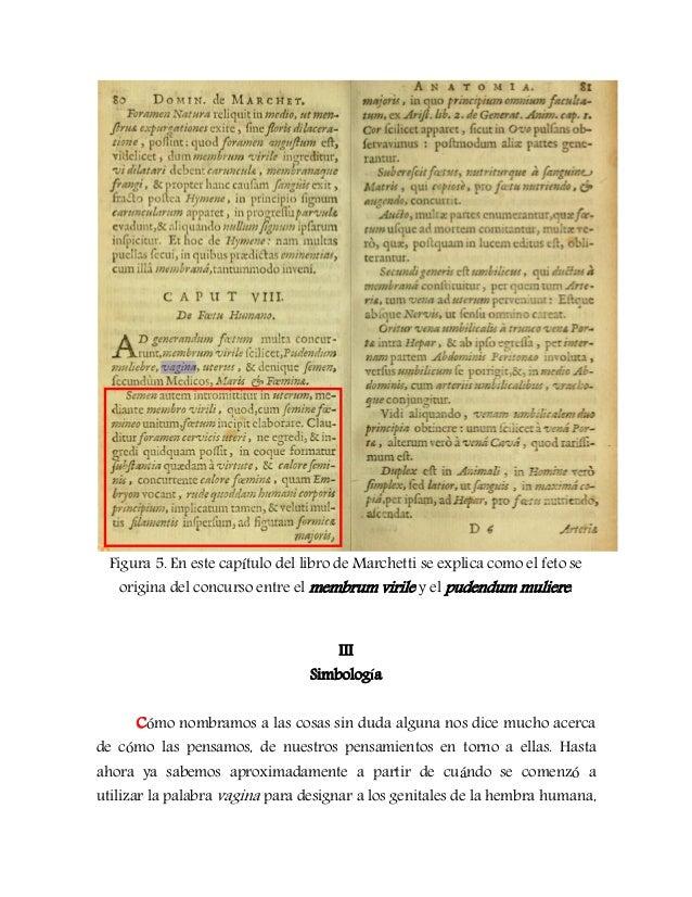 Significado y simbolismo de la etimolog a de vagina for Significado de la palabra beta