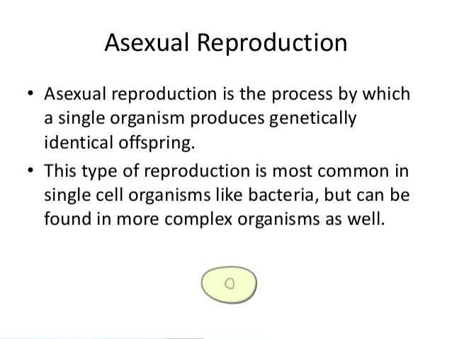 Significance of mitosis in asexual reproduction how many parents