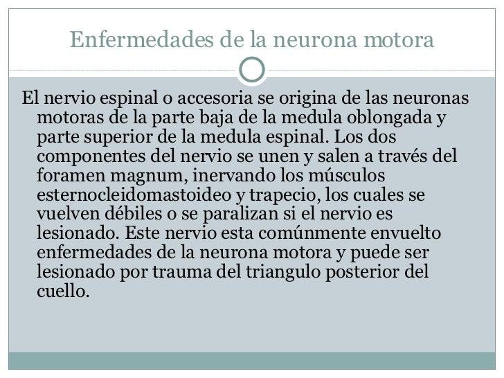 Enfermedades de la neurona motora <ul><li>El nervio espinal o accesoria se origina de las neuronas motoras de la parte baj...