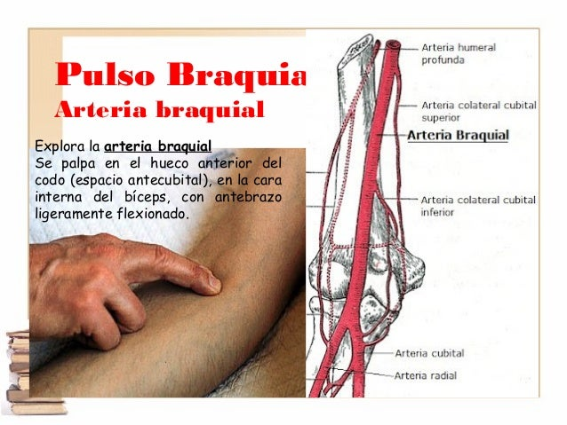 Signos vitales fisiología Descripción detallada