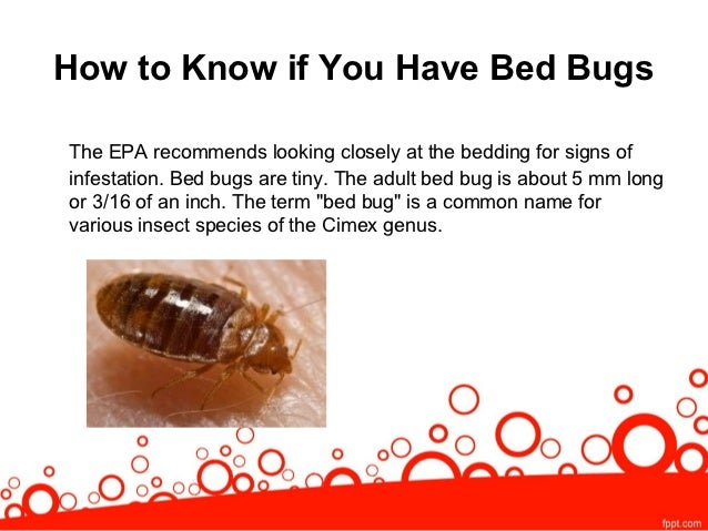 How Do You You Bed Bugs 28 Images How Do U Get Bed