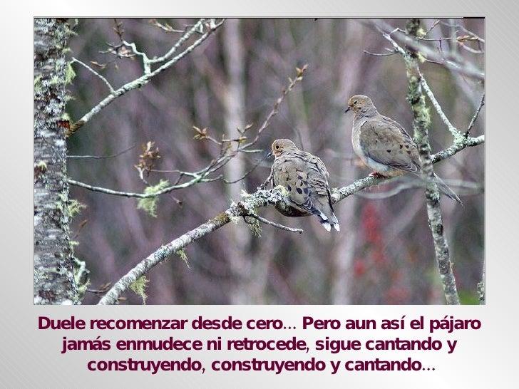 Duele recomenzar desde cero... Pero aun así el pájaro  jamás enmudece ni retrocede, sigue cantando y  construyendo, constr...
