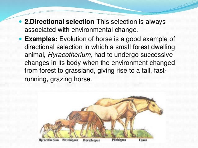 Directional Selection Examples In Animals Choice Image Example