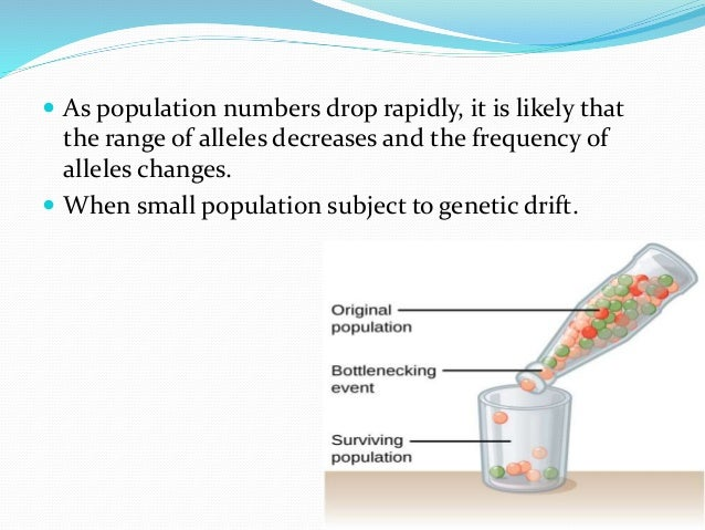  As population numbers drop rapidly, it is likely that the range of alleles decreases and the frequency of alleles change...