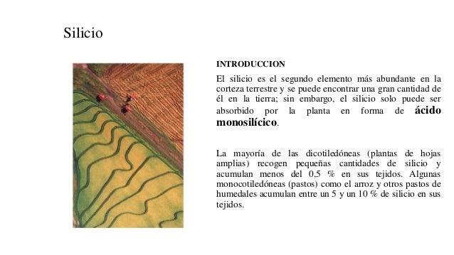 Silicio INTRODUCCION El silicio es el segundo elemento más abundante en la corteza terrestre y se puede encontrar una gran...