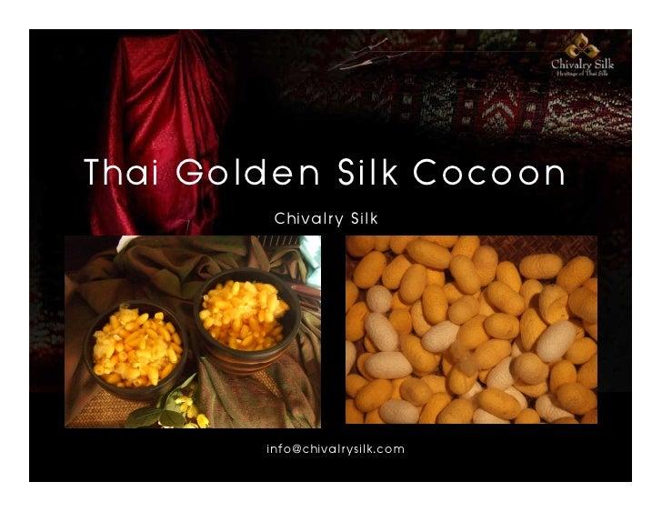 Thai Golden Silk Cocoon          Chivalry Silk             info@chivalrysilk.com