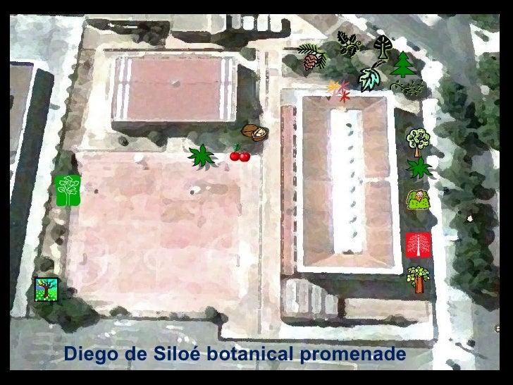Diego de Siloé botanical promenade