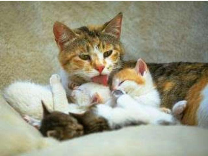 • La                       • Al unirse los gametos  fecundación, puede         surge la célula huevo  ser: interna, (apara...