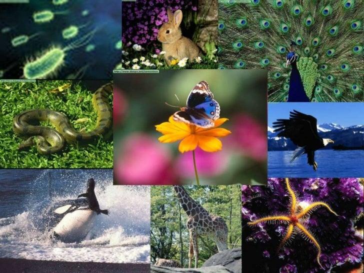 • Los individuos de  cada especie, se  reproducen, para  originar nuevos seres  iguales a ellos.