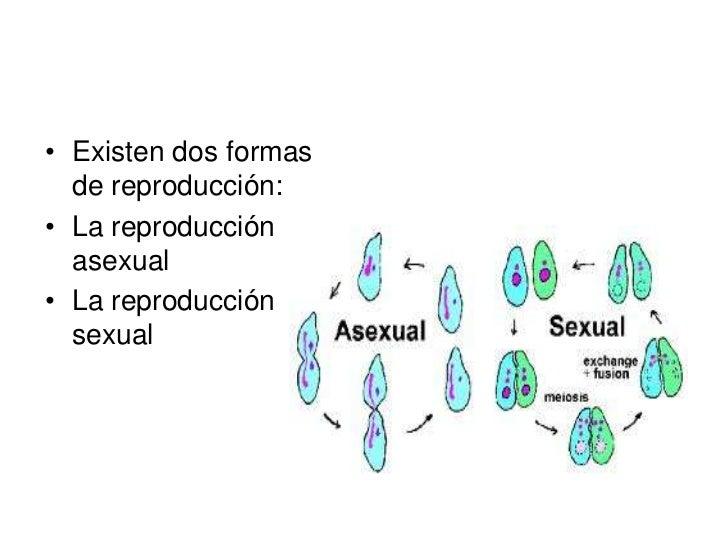 REPRODUCCION ASEXUAL• En este tipo de  reproducción sólo  interviene un  individuo.• Es frecuente entre los  reinos  proca...