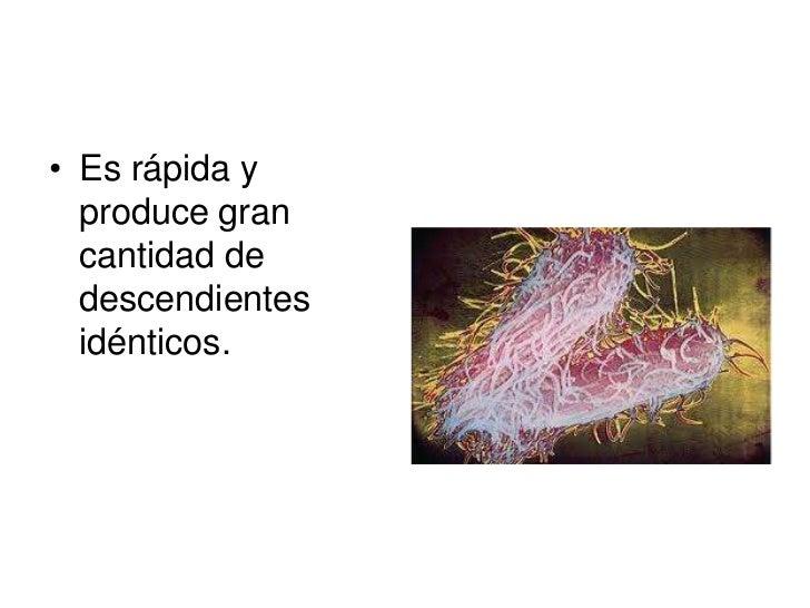 • La mayoría de las     • En los animales, se  plantas tienen una      presenta en las  reproducción            esponjas, ...