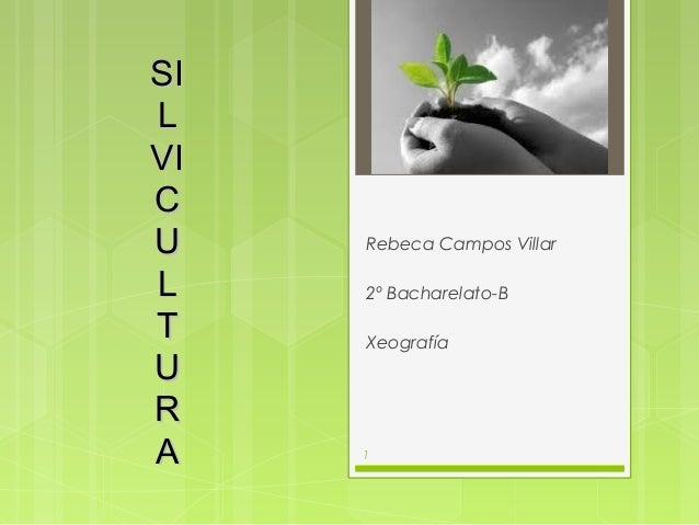SILVICU    Rebeca Campos VillarL    2º Bacharelato-BT    XeografíaURA    1