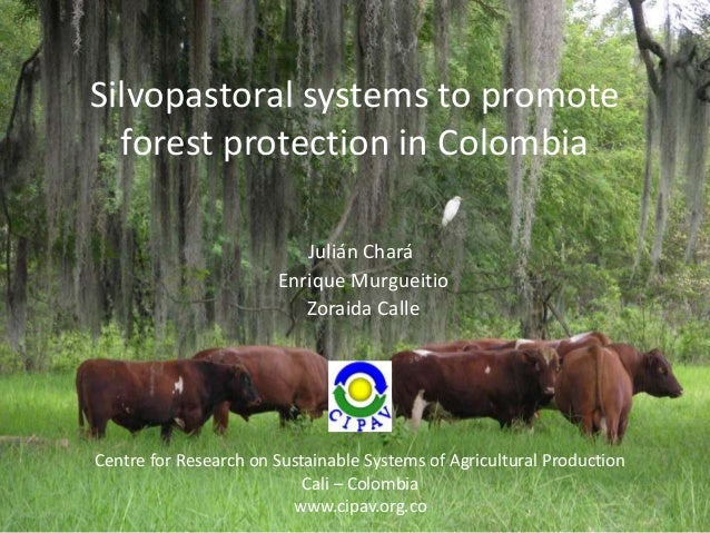 Silvopastoral systems to promote  forest protection in Colombia                          Julián Chará                     ...