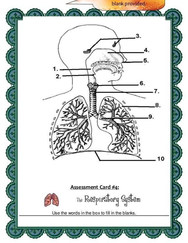 Strategic Intervention Material Sim Science Circulatory And Respira