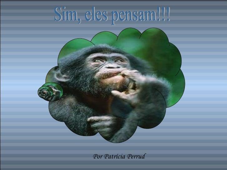 Sim, eles pensam!!! Por Patrícia Perrud