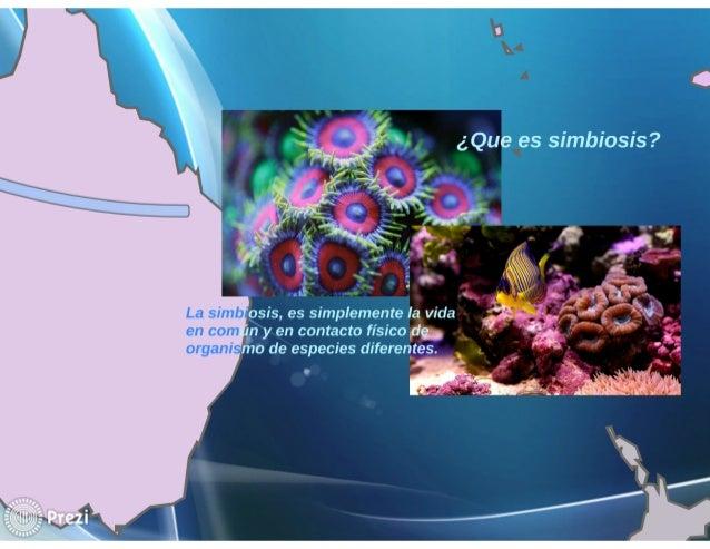 Simbiosis de zooxantella y coral Slide 3