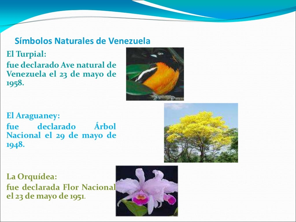 Simbolos Naturales De Venezuela | simbolos naturales de venezuela