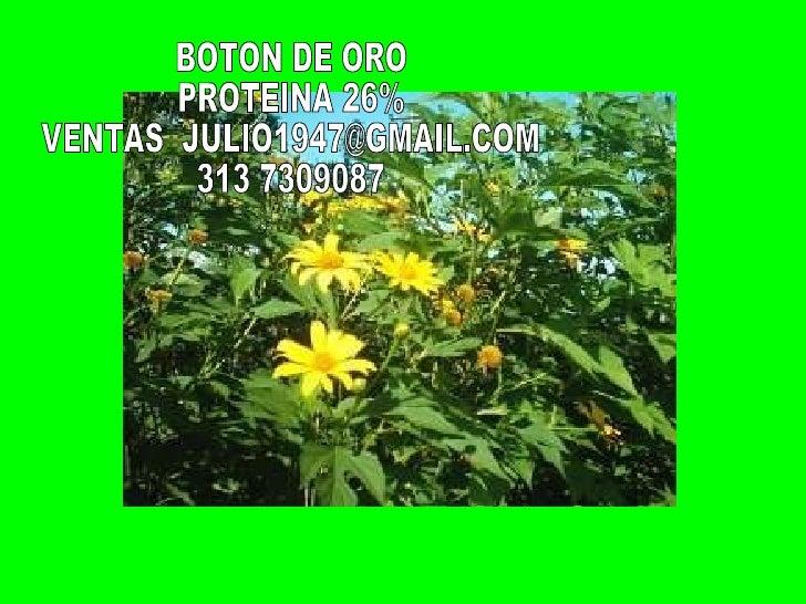 BOTON DE ORO PROTEINA 26% VENTAS  [email_address] 313 7309087