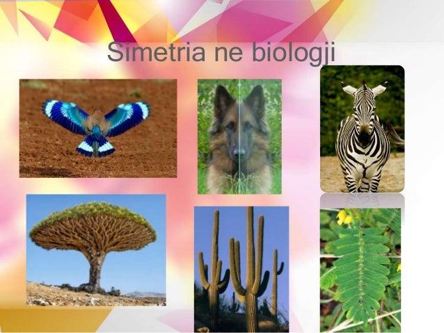 Simetria ne biologji