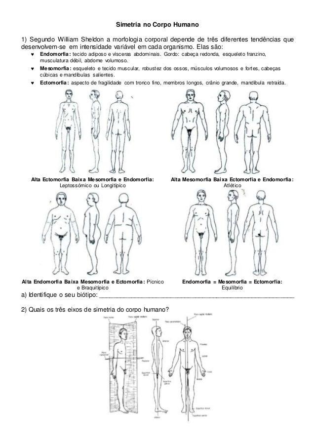 Simetria no Corpo Humano 1) Segundo William Sheldon a morfologia corporal depende de três diferentes tendências que desenv...